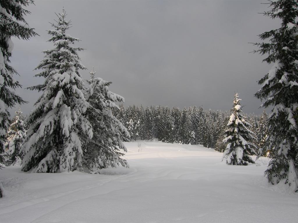 Kysucký Lieskovec - stromy