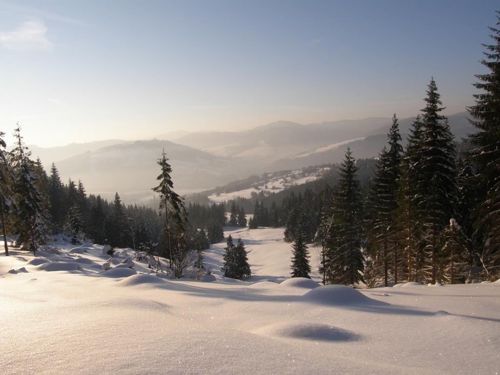 Kysucký Lieskovec - les