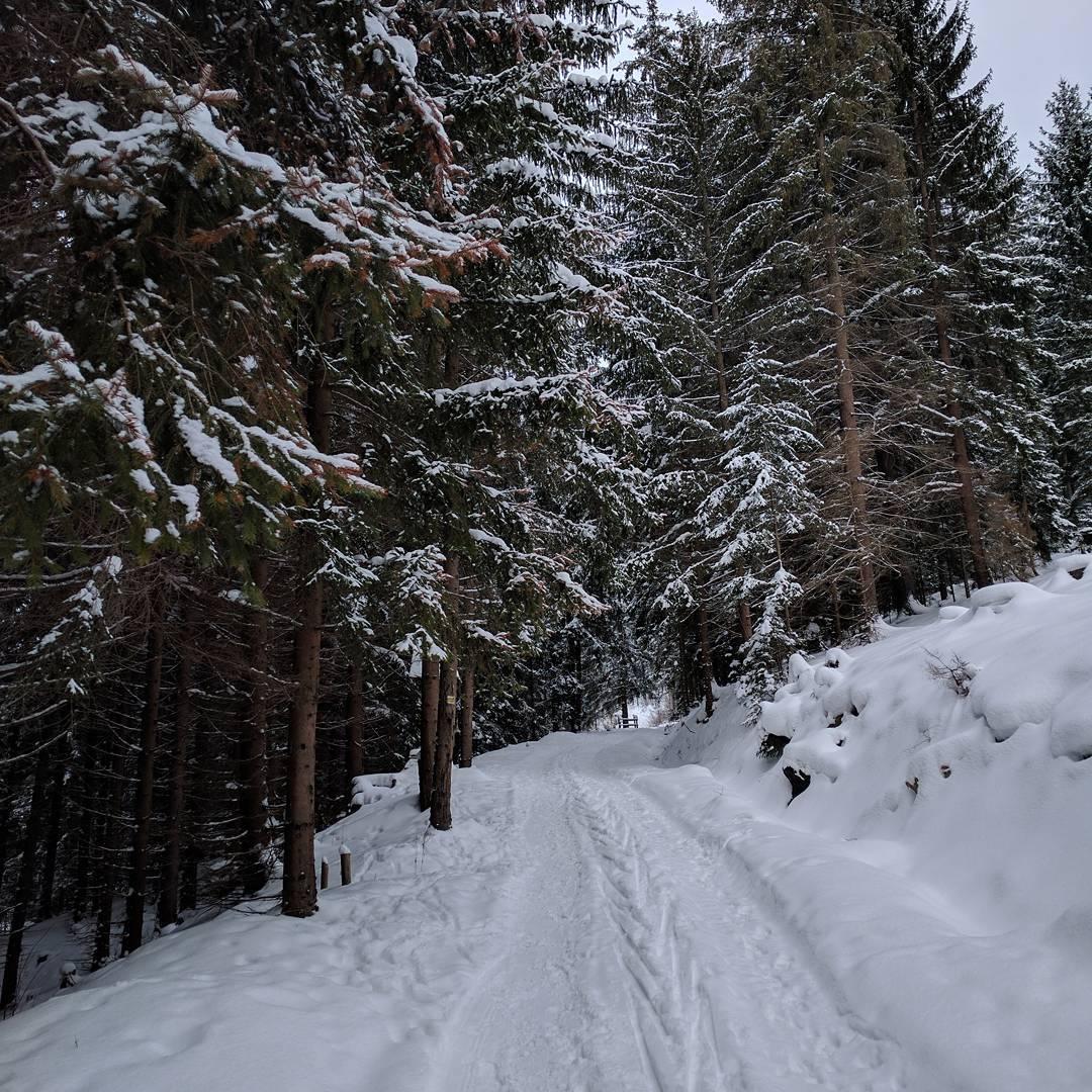 Zasnežená cesta